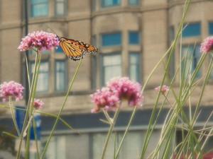 butterflyincity